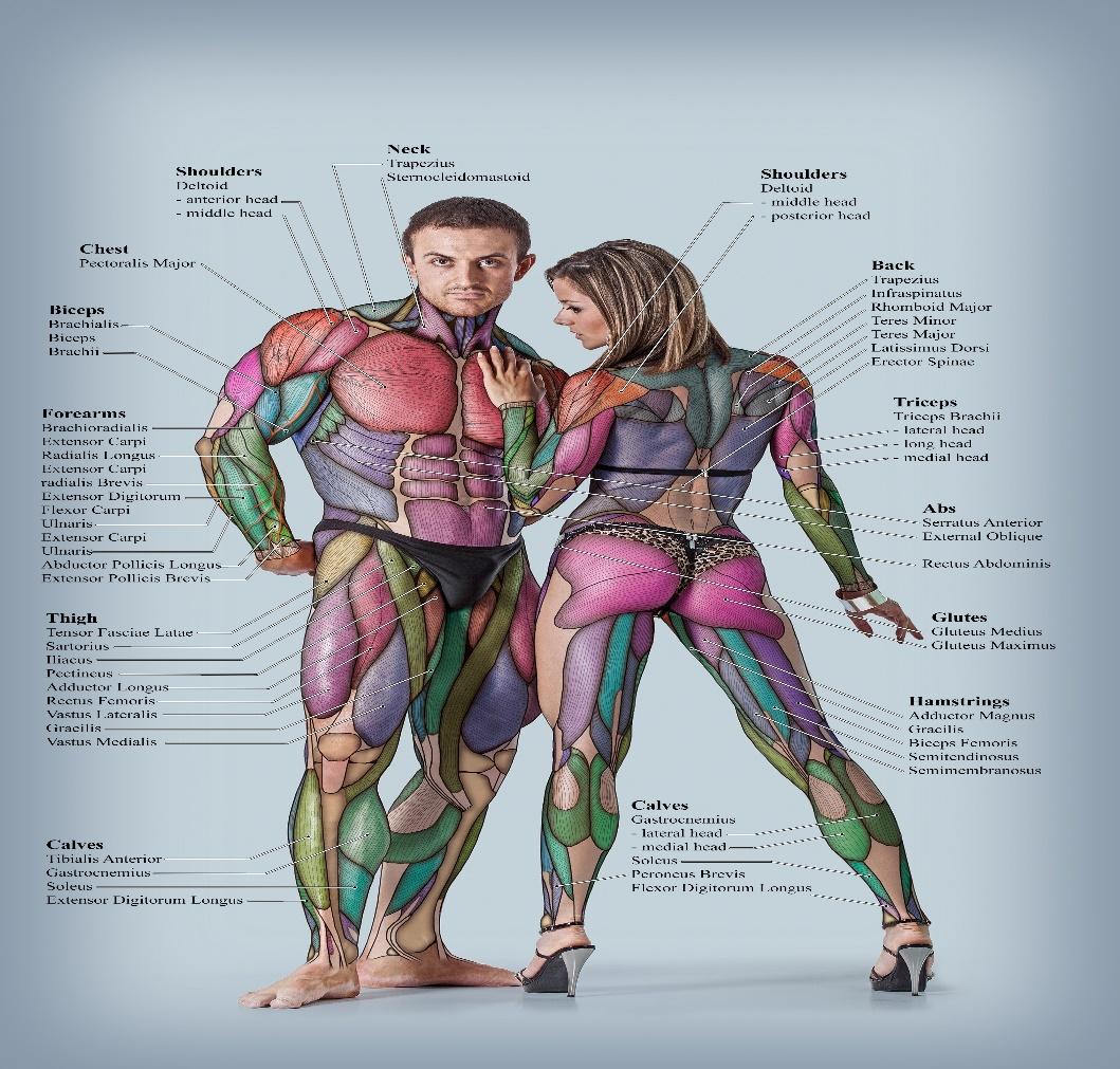 Θεραπείες σώματος
